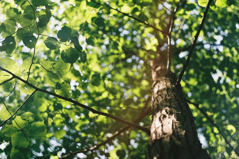 Tree trunk and leaves in the sunlight